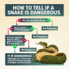 how-to-tell-if-a-snake-is-dangerous-no-are-45703892.png