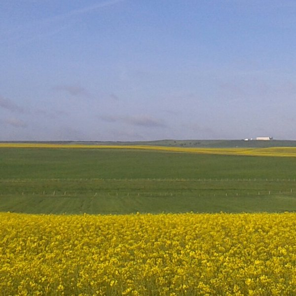 Rapeseed fields near Salamanca