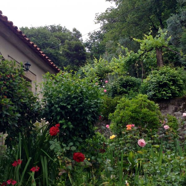 another lovely garden in portugal