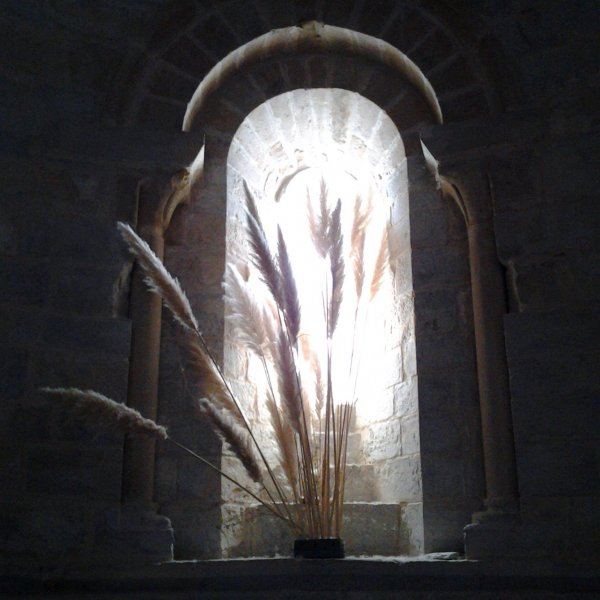 Fern light up through an Alabaster window