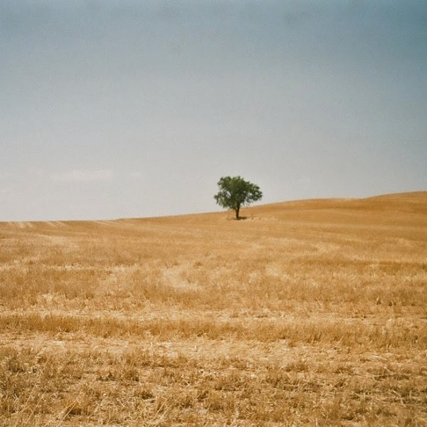 The well-known tree near Logrono