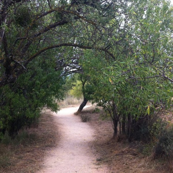 Camino path through olive grove after Puente la Reina