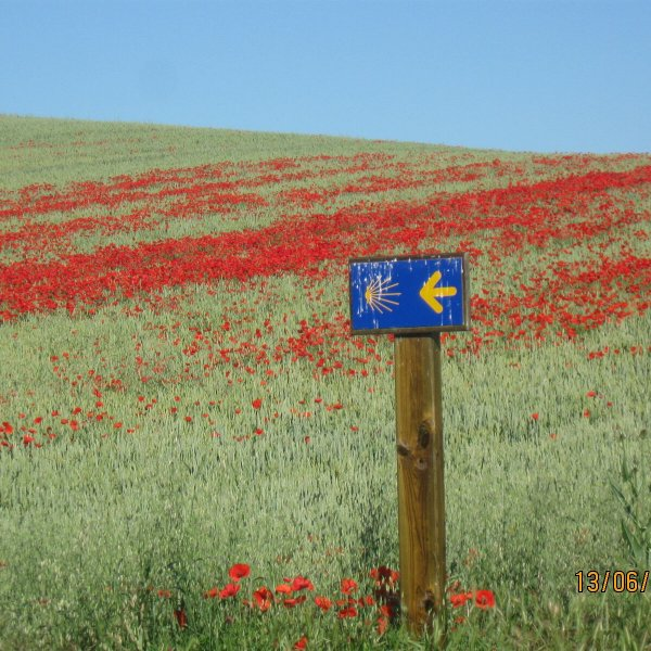 Poppies & posts