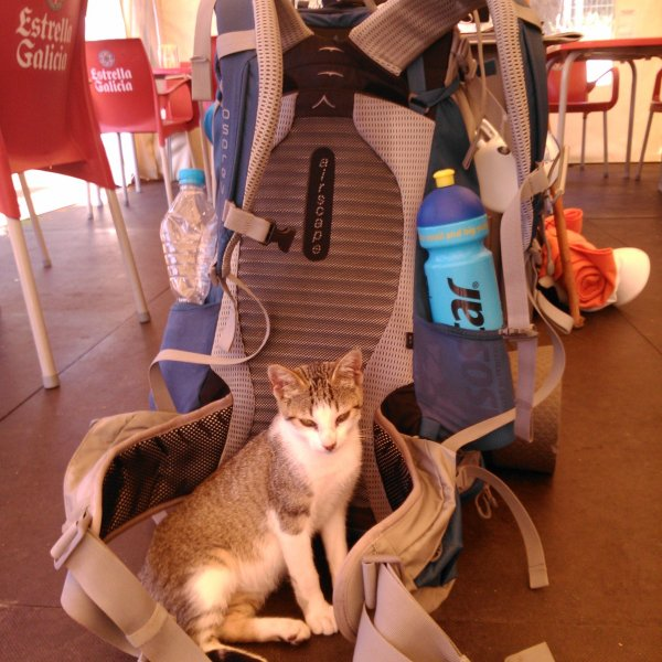 This cat wanted my backpack! :)