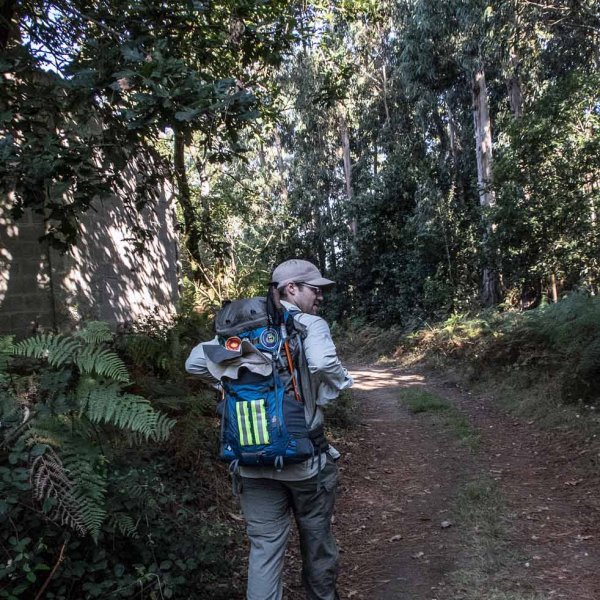 Camino Ingles - Into the forest......