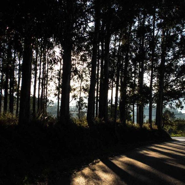 Through the forest - -Walking to Betanzos......along the varied way.......