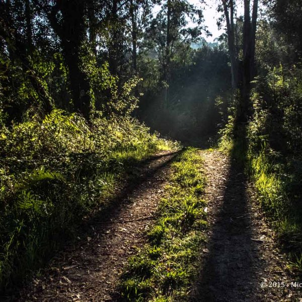 In the forest - - Walking to Betanzos......along the varied way.......