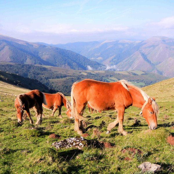 Horses on top of Pyrenees