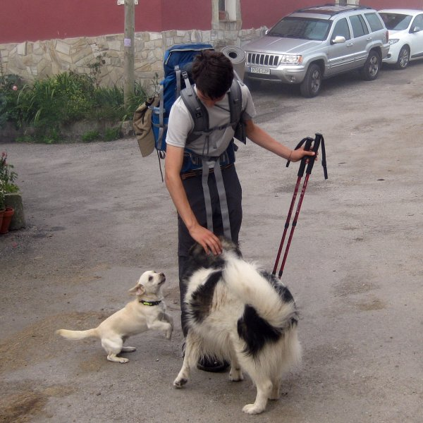 Dogs on Camino Primitivo are friendly