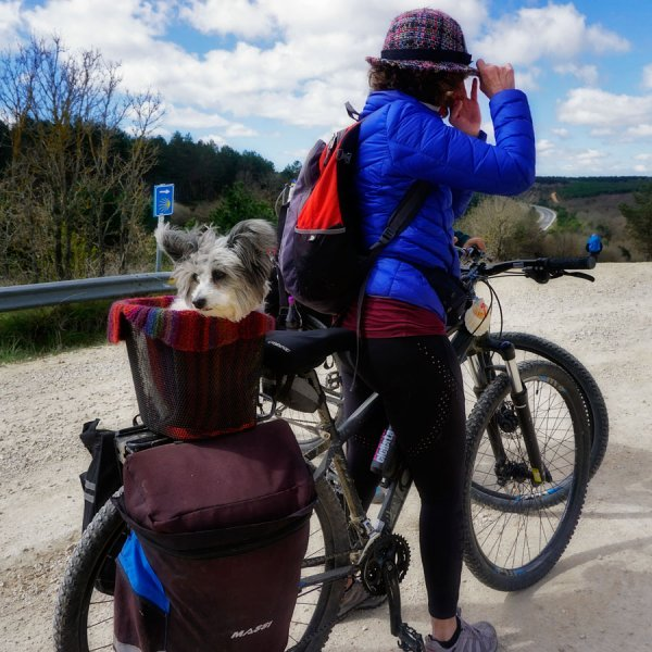 Canine on the Camino