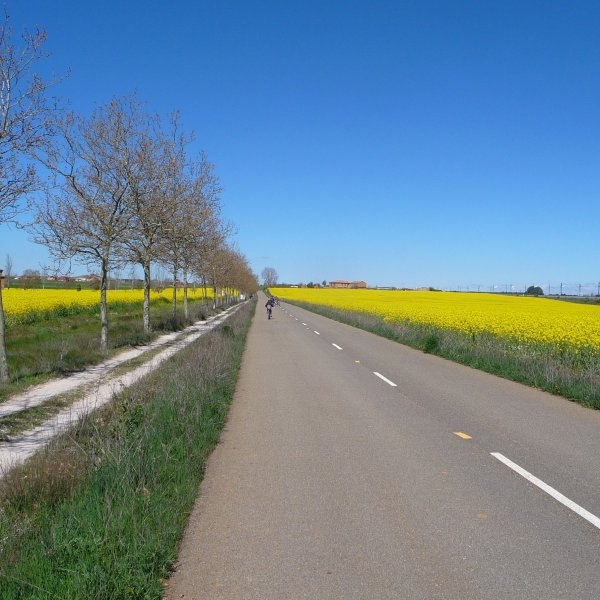 Roman Road and Rape Fields