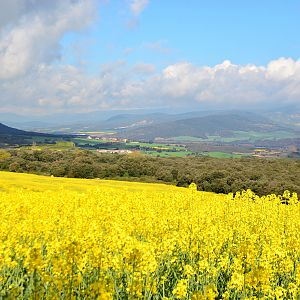 Great views around Villamajor de Monjardin Spring 2016 featuring Canola fields