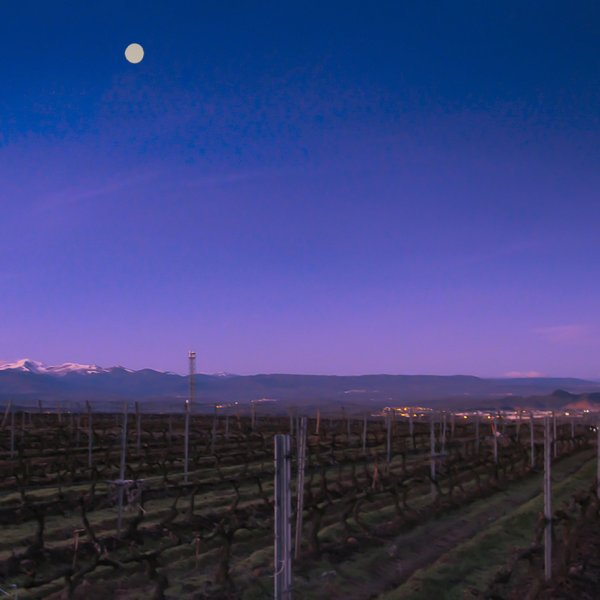 Moon Setting Over Vineyard