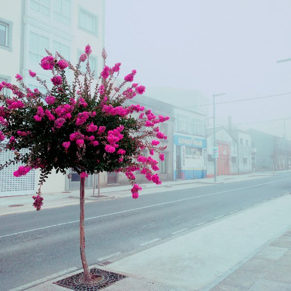 Colour in the fog of Arzúa