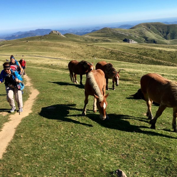 Pyrenees & Ponies ... in August