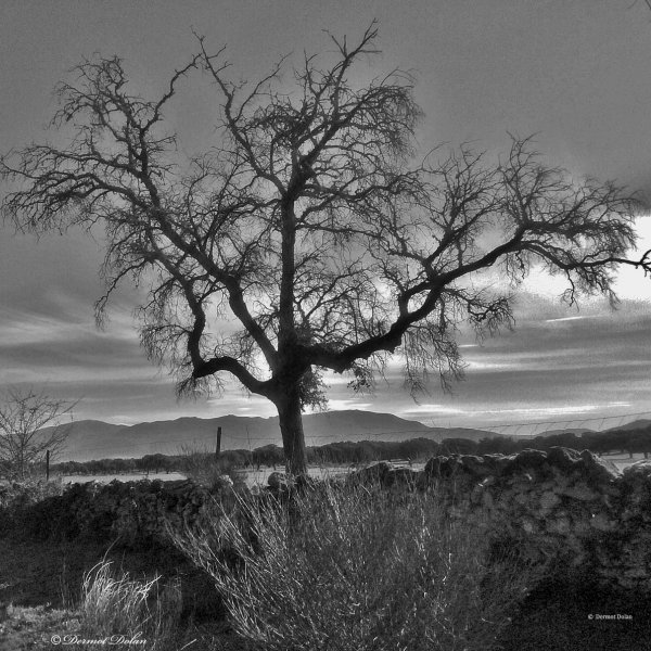 Winter tree. (near Carcabosa)