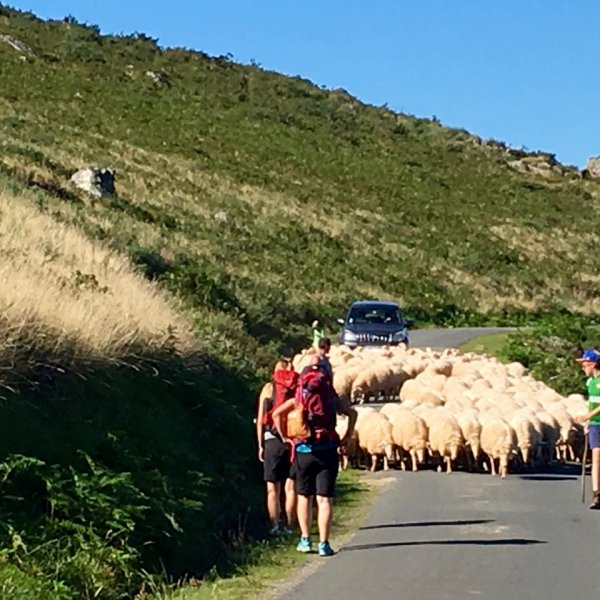 Pyrenees traffic jam