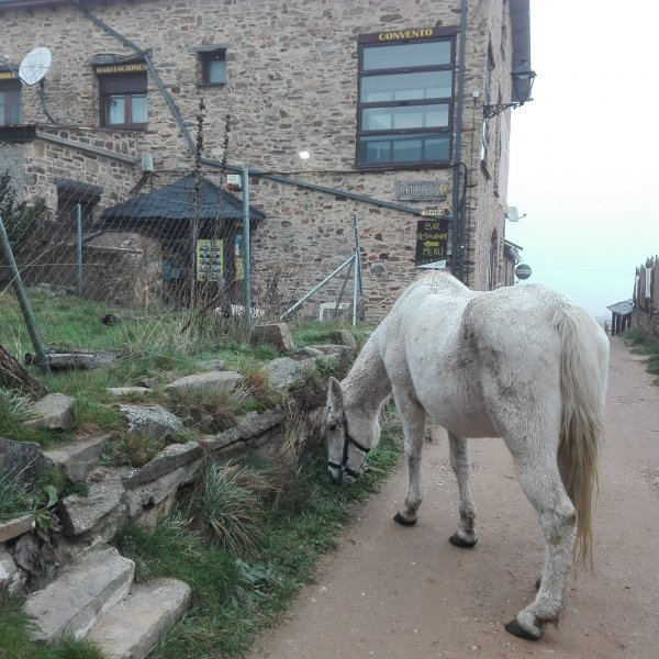 Foncebadon, truly a one horse town