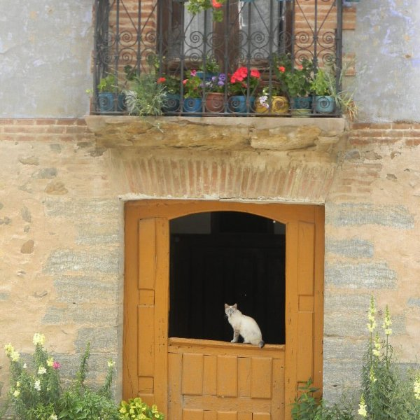 cat on door, Villamayor del Rio, just before Belorado on the Camino Frances headed west.