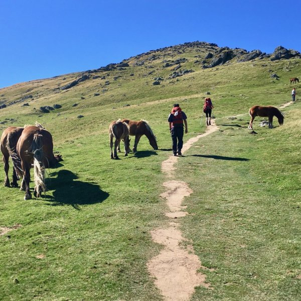 Pony trail to Col de Lepoeder