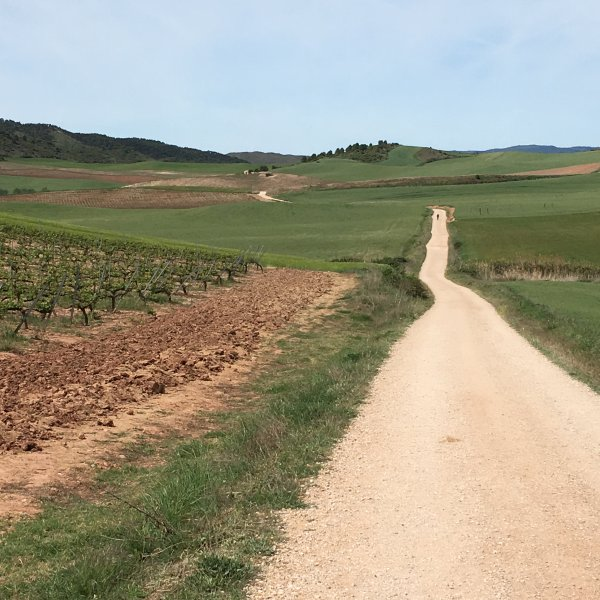 Camino Frances - Between Irache & Los Arcos (May 2017)