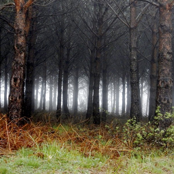 Foggy morning in the Oca Mountains