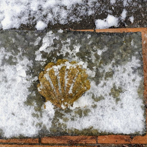 The Ritual, ... parting and farewell to the front porch Camino Scallop
