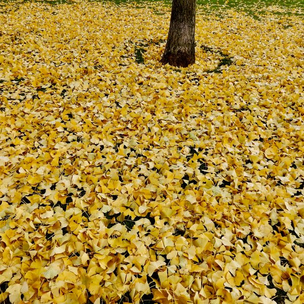 Fallen leaves in Ponferrada