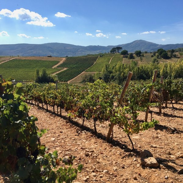Vines of del Bierzo - before Villafranca
