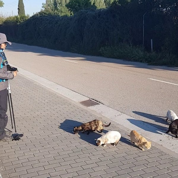 The Cats of the Camino - It's that 'Cat Lady' Again!