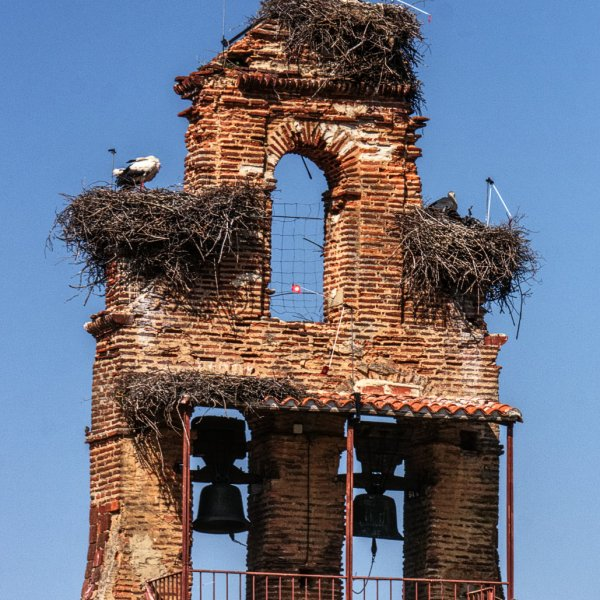 Storks in the Belfry